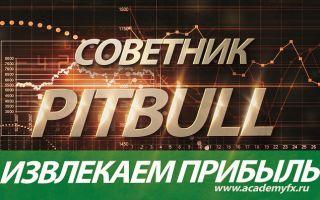 Советник pitbull – агрессивный и цепкий советник